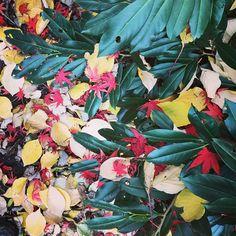 Herbst im Garten Plants, Painting, Autumn, Lawn And Garden, Painting Art, Paintings, Plant, Painted Canvas, Drawings