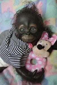 baby gorilla girl   ... -Reborn-monkey-orangutan-baby-Girl-art-doll-original-newborn-gorilla