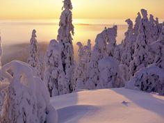 Huipulla, Koli, Finland