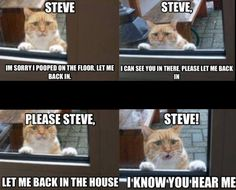 Page 4 of 714 - LOLcats is the best place to find and submit funny cat memes and other silly cat materials to share with the world. We find the funny cats that make you LOL so that you don't have to. Humor Animal, Animal Memes, Funny Animals, Cute Animals, Animal Captions, Really Funny Pictures, Funny Cat Pictures, Funny Images, Funny Photos