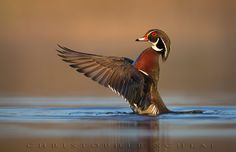BIRD ART by CHRISTOPHER SCHLAF on 500px