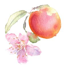Watercolor illustration, nature illustration, and scenic illustration for advertising, editorial commercial application. Japanese Watercolor, Watercolor Fruit, Fruit Painting, Watercolor Flowers, Nature Illustration, Botanical Illustration, Watercolor Illustration, Painting & Drawing, Watercolor Paintings