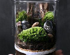 Esfera bola de musgo / Moss acuario Biosfera Kit del tazón de