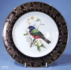 Royal Falcon Ironstone Finch Bone China Display Plate