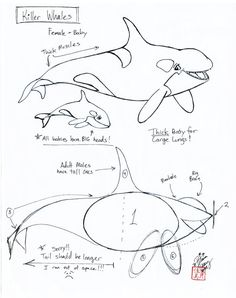 Draw a Killer Whale by Diana-Huang