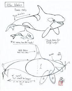 Draw a Killer Whale by Diana-Huang.deviantart.com on @deviantART