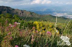 Panorama con la cresta del Monte Somma, Valle del Gigante e Valle dell'Inferno sul Vesuvio (ph Gianfranco Adduci) - Valeriana rossa and Genista...
