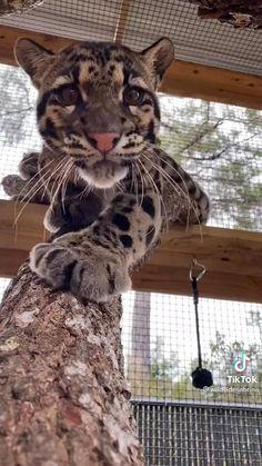 Funny Animal Videos, Cute Funny Animals, Cute Baby Animals, Animals And Pets, Cute Cats, Funny Cats, Cute Creatures, Beautiful Creatures, Animals Beautiful