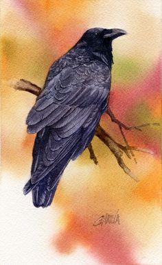 Raven by Joe Garcia Watercolor ~ 7 x Watercolor Bird, Watercolor Animals, Watercolor Paintings, Watercolors, Crow Painting, Quoth The Raven, Dark Wings, Raven Art, Jackdaw
