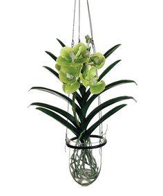 Vanda Orchid Hang Plant #zulily #zulilyfinds