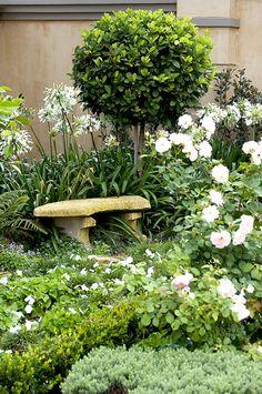 Agapanthes et rosier Iceberg autour d'un petit banc du jardin