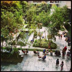 MoMA Garden