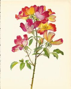 Use coupon code PINTEREST to save 10% off of your purchase! Stunning VINTAGE ROSE PRINT Pink and Yellow Rose by UpcycleFarmer