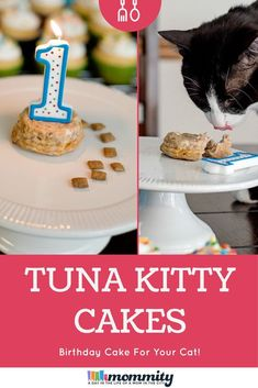 Healthy Homemade Cat Treats How to Make a Birthday Cake for Your Cat Pet Birthday Cake Cat Cat birthdays Healthy Homemade Treats Birthday Cake For Cat, Birthday Treats, Animal Birthday, Birthday Parties, Cake Recipe For Cats, Homemade Cat Food, Dry Cat Food, Best Cat Food, Pet Food