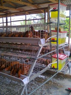 Building A Portable Chicken Coop Most people probably prefer a static chicken coop but there are times where a portable chicken coop is necessary. For example, you may need to move the coop to different parts of your property throu