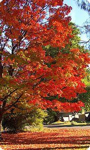 I love Fall!!