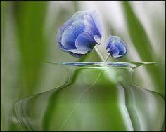 blue,,,,,,