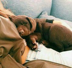 #dogs #puppy #animals #sleepy