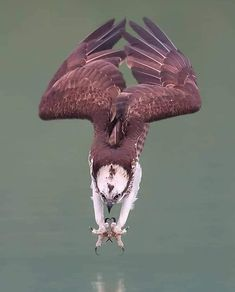 Terrific Photo beautiful birds of prey Popular For a gulls connected with prey wedding photographer, the most important issue a lot of complain concerning m Nature Animals, Animals And Pets, Funny Animals, Cute Animals, Wildlife Nature, Pretty Birds, Beautiful Birds, Animals Beautiful, Exotic Birds