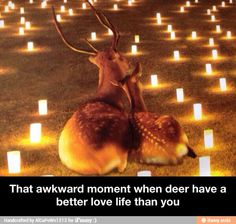 We noticed that these Funny Memes about Life Awkward moments are so funny. Just see these Funny Memes about Life Awkward moments and keep smile.Read This 24 Funny Memes About Life Awkward moments Funny Animal Pictures, Funny Animals, Cute Animals, Animal Memes, Animal Humor, Sneaky Animals, Funny Cute, The Funny, Funny Pics