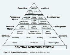 SENSORY INTEGRATION Central Nervous System