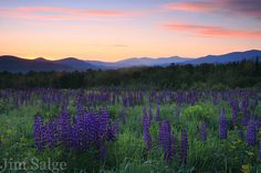 The Sampler Field in Sugar Hill, New Hampshire (by Jim Salge)