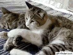 Cute Cat Hug