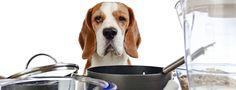 Los perros pueden ser vegetarianos o veganos? - Alimentación Canina