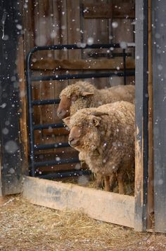Punkin's Patch-http://myfavoritesheep.blogspot.ca/search?updated-max=2015-01-27T08:43:00-05:00&max-results=25