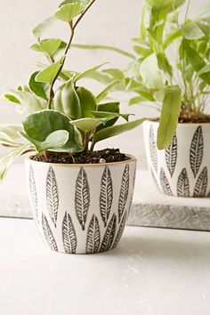 Magical Thinking Feather Planter - Urban Outfitters