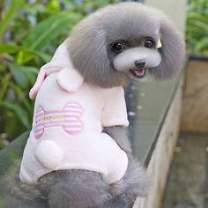 Most Inspiring Teddy Bear Chubby Adorable Dog - e6d4d298e358528467fdcf94cf7ca080--teddy-bear-puppies-bear-puppy  Graphic_532674  .jpg