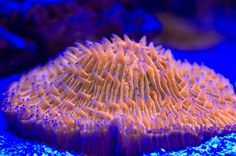 Nano SPS / Mixed Reefs POST YOUR PICTURES - Manhattan Reefs