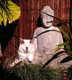 Buddah Cats - Album on Imgur