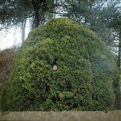 My head is a shrub Shrubs, Golf Courses, Flora, Country Roads, Green, Random Stuff, Boats, Random Things, Shrub