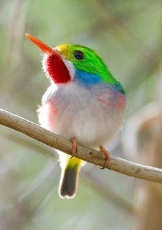 beautiful bird  :)
