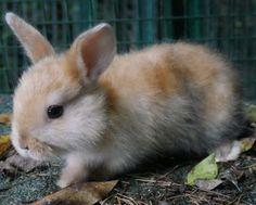 Vivid Arts-La vraie vie des lapins-Playful Lapin