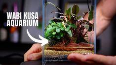 Terrariums, Best Terrarium Plants, Fish Tank Terrarium, Terrarium Ideas, Aquascaping, Small Glass Containers, Miniature Zen Garden, Mini Pond, Indoor Water Garden