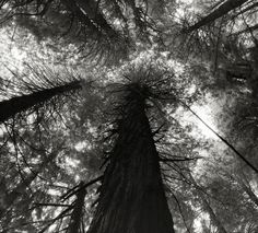 Beautiful dark twisted fantasies: the world's most ancient trees – in pictures | Art and design | The Guardian