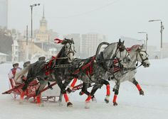 Russian Troika driving competitions in Moscow