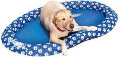 Dog Pool Raft