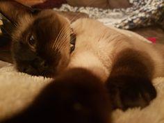 Nonchalant Cat Selfie