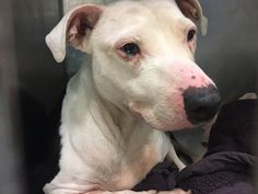 DORY - 16762 - - Manhattan  TO BE DESTROYED 12/28/2017 **PUBLICLY ADOPTABLE** -  Click for info & Current Status: http://nycdogs.urgentpodr.org/dory-16762/