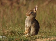 Little Rabbit by info1325. Please Like http://fb.me/go4photos and Follow @go4fotos Thank You. :-)