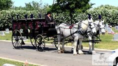 At the grave site, black hearse with purple plumes on hearse and horses
