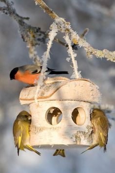cabane oiseau miraculeuse