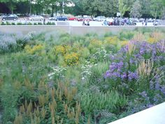 Planting in public spaces is the best manner of introducing ecology based gardens to much larger groups of  people.