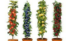Groupon Goods Global GmbH: 1 ou 2 lots de 4 arbres fruitiers, dès 34,90€ (jusqu'à 57% de réduction)
