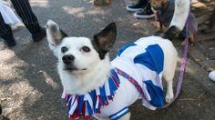 Photos from the Halloween Dog Parade 2017