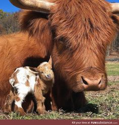 Fat – farm animals get fat- the animation HD - Cute and beautiful animals - Dogs Baby Farm Animals, Baby Cows, Baby Animals Pictures, Cute Little Animals, Cute Animal Pictures, Cute Funny Animals, Animals And Pets, Wild Animals, Animals Images