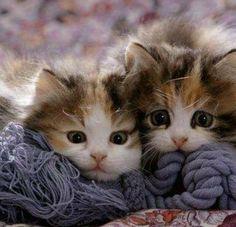So cute ^_^